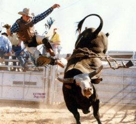 Why Your Ego Holds You Back (And How NOT to Ride a Bull)